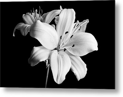 Asian Lilies 1 Metal Print by Sebastian Musial