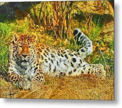 Asian Snow Leopard Metal Print