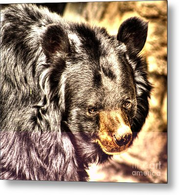 Asiatic Black Bear Metal Print