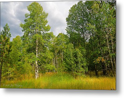 Metal Print featuring the photograph Aspen And Others by Jim Thompson