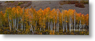 Metal Print featuring the photograph Aspen Band by Steven Reed