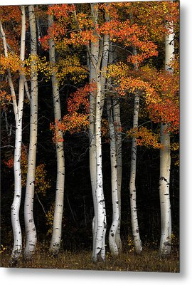 Aspen Contrast Metal Print by Leland D Howard