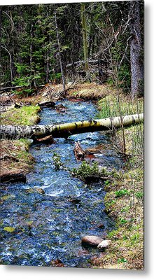 Metal Print featuring the photograph Aspen Crossing Mountain Stream by Barbara Chichester