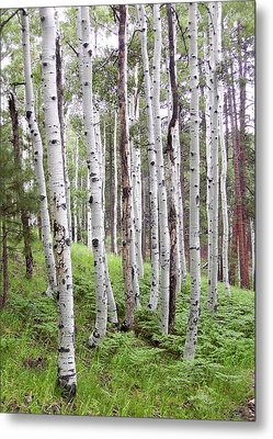 Aspen Forest Metal Print by Laurel Powell