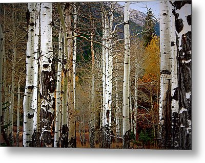 Aspen In The Rockies Metal Print by Lynn Sprowl