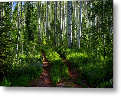 Aspen Lane Metal Print by Jeremy Rhoades