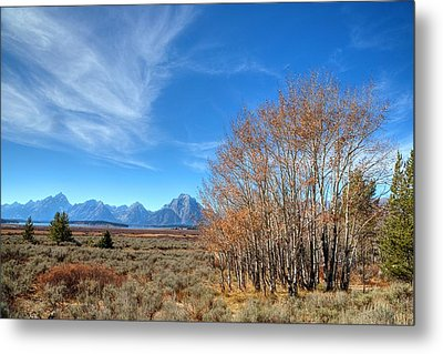 Metal Print featuring the photograph Aspen Last Stand  by David Andersen