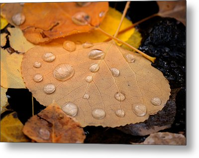 Aspen Leaf With Water Drops Metal Print