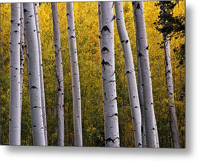 Aspen Light 2 Metal Print by Dave Dilli