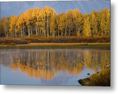 Metal Print featuring the photograph Aspen Reflection by Sonya Lang