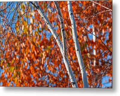 Metal Print featuring the photograph Aspen by Sebastian Musial