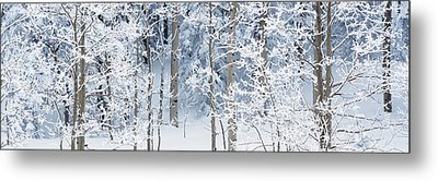 Aspen Trees Covered With Snow, Taos Metal Print by Panoramic Images