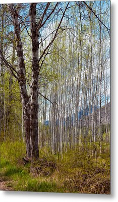 Aspen Trees Proudly Standing Metal Print by Omaste Witkowski