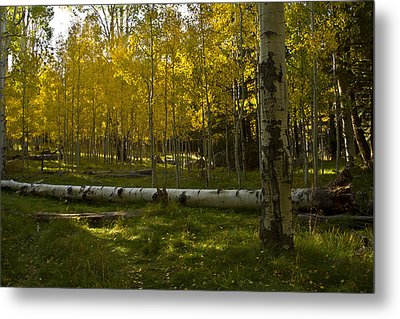 Metal Print featuring the photograph Aspens 4619 by Tom Kelly