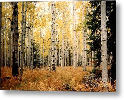 Metal Print featuring the photograph Aspens by Fred Wilson