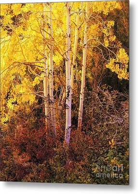 Aspens In Autumn Metal Print by Nancy Marie Ricketts