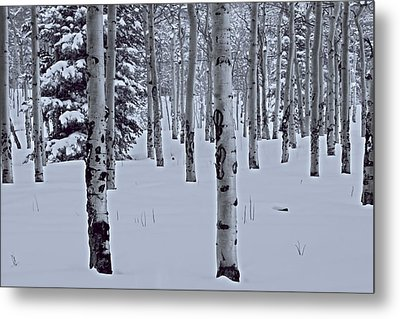 Metal Print featuring the photograph Aspens In The Snow by Kristal Kraft