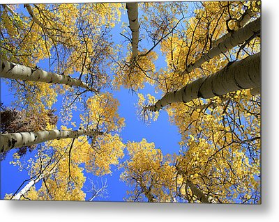 Aspens Skyward Metal Print by John Daly