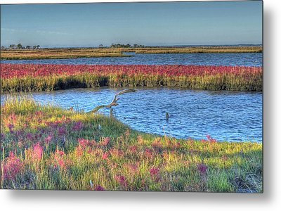 Asseteague Island Salt Marsh Metal Print by Greg Vizzi