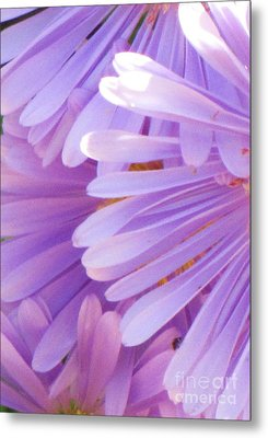 Metal Print featuring the photograph Aster Petals by Michele Penner