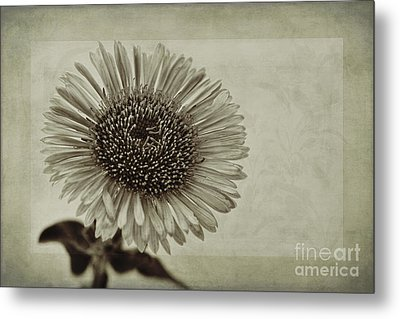 Aster With Textures Metal Print by John Edwards