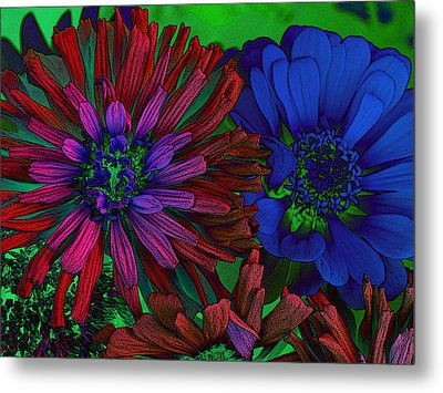 Asters Metal Print by David Pantuso