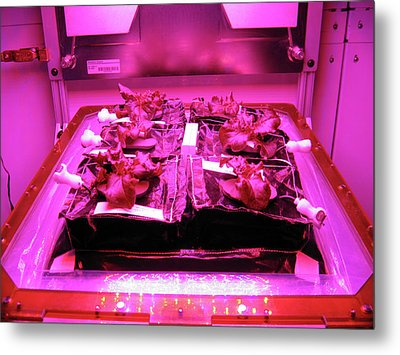 Astronaut Vegetable Production System Metal Print by Nasa