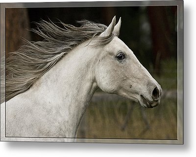 At A Full Gallop Metal Print by Wes and Dotty Weber