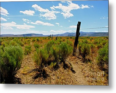 At Country  Metal Print by Tim Rice