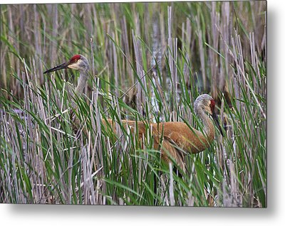 Metal Print featuring the photograph At Home In The Marsh by Gary Hall