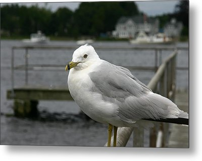 Metal Print featuring the photograph At The Boat Landing by Denyse Duhaime