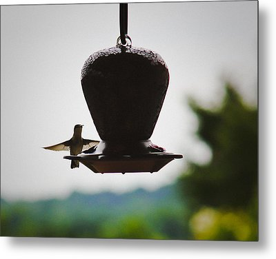 Metal Print featuring the photograph At The Feeder by Debra Crank