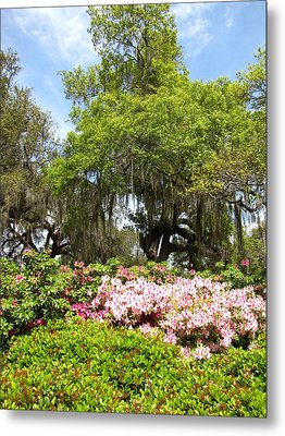 Metal Print featuring the photograph At The Park by Beth Vincent