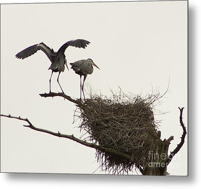 Metal Print featuring the photograph At The Rookery by Alice Mainville