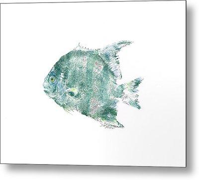 Atlantic Spadefish Metal Print by Nancy Gorr