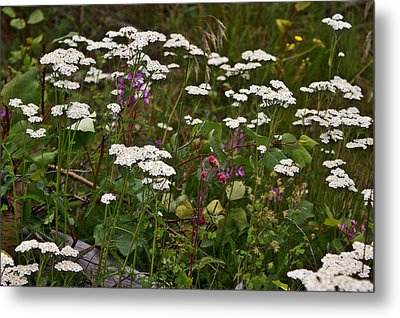 Metal Print featuring the photograph August Flowers by Jeremy Rhoades