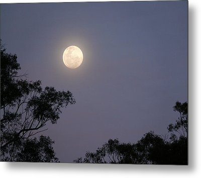August Moon Metal Print by Evelyn Tambour