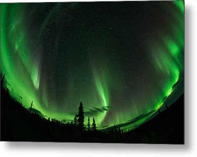 Aurora Embrace Metal Print by Roger Clifford