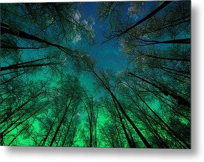 Aurora Glow Through The Birches Metal Print by Roger Clifford