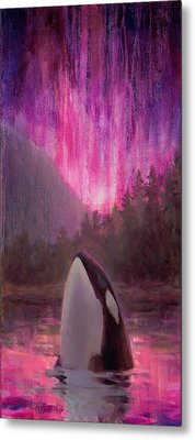 Aurora Orca Metal Print by Karen Whitworth
