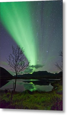 Auroras And Tree Metal Print by Frank Olsen