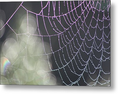 Metal Print featuring the photograph Aurora's Web by Cathie Douglas