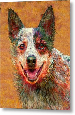 Australian Cattle Dog Metal Print by Jane Schnetlage