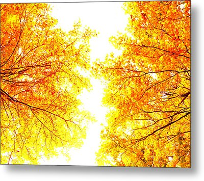 Autumn Abstract Metal Print by Tim Good