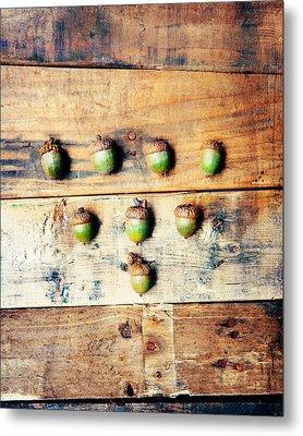 Autumn Acorns Metal Print by Kim Fearheiley