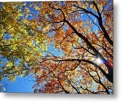 Autumn Afternoon Metal Print by Cricket Hackmann