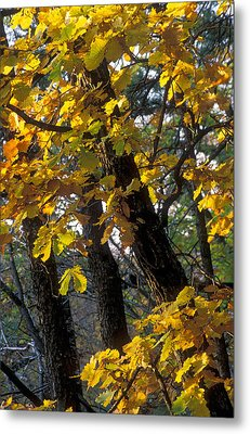 Autumn Metal Print by Anonymous