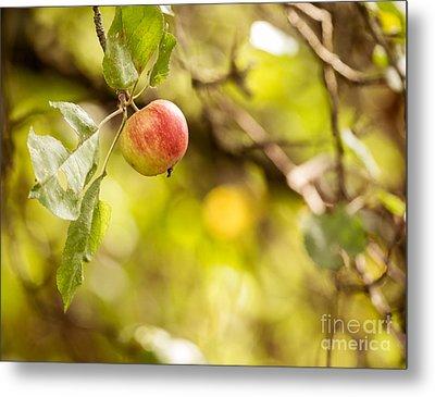Autumn Apple Metal Print by Matt Malloy