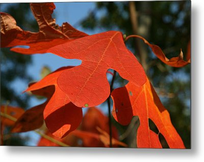 Metal Print featuring the photograph Autumn Attention by Neal Eslinger