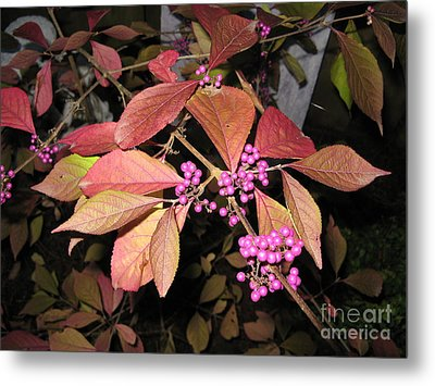 Autumn Beauty Berry Metal Print by Marlene Rose Besso